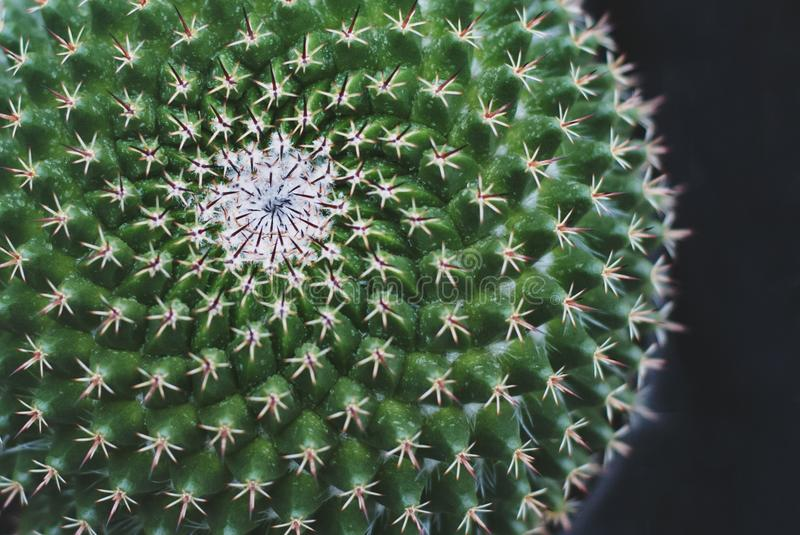 Plant, Cactus, Thorns Spines And Prickles, Vegetation royalty free stock photo