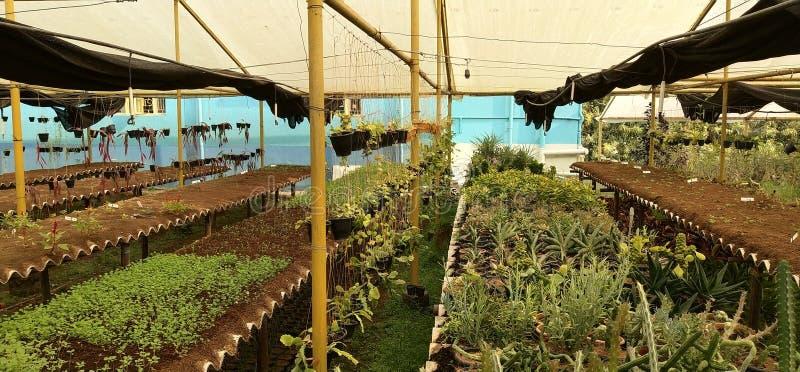 Plant& x27; casa verde de la agricultura de s fotografía de archivo