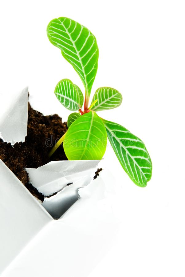 Download Plant in a case stock image. Image of caucasian, break - 27890199