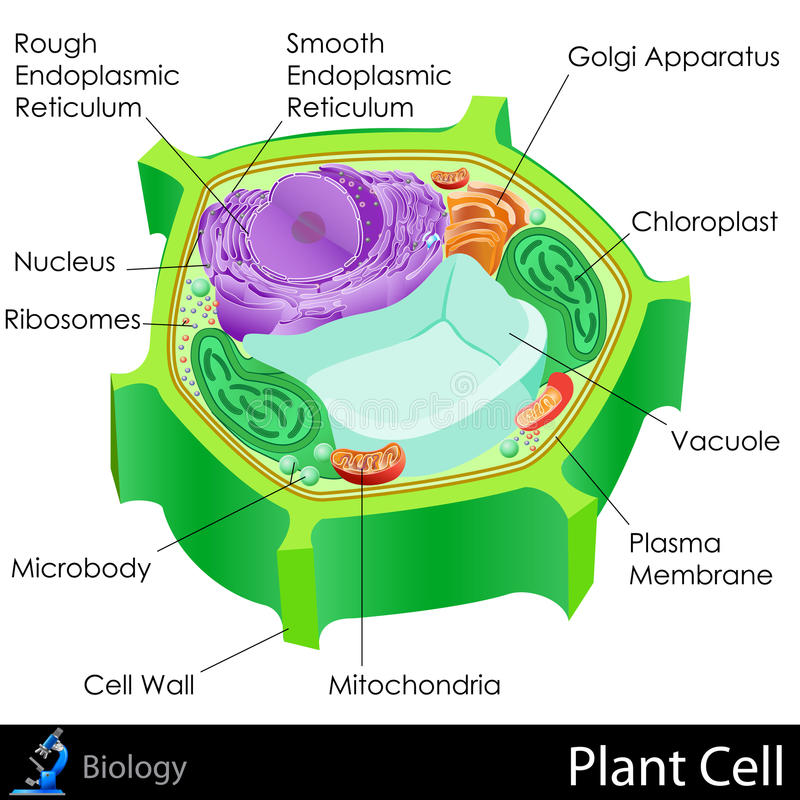 Plant Cell Stock Illustration Illustration Of Design 31606462
