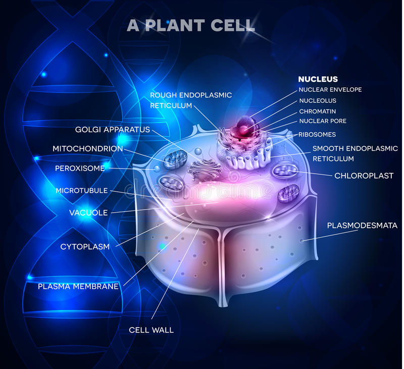 Plant Cell structure and DNA chain. At the background stock illustration