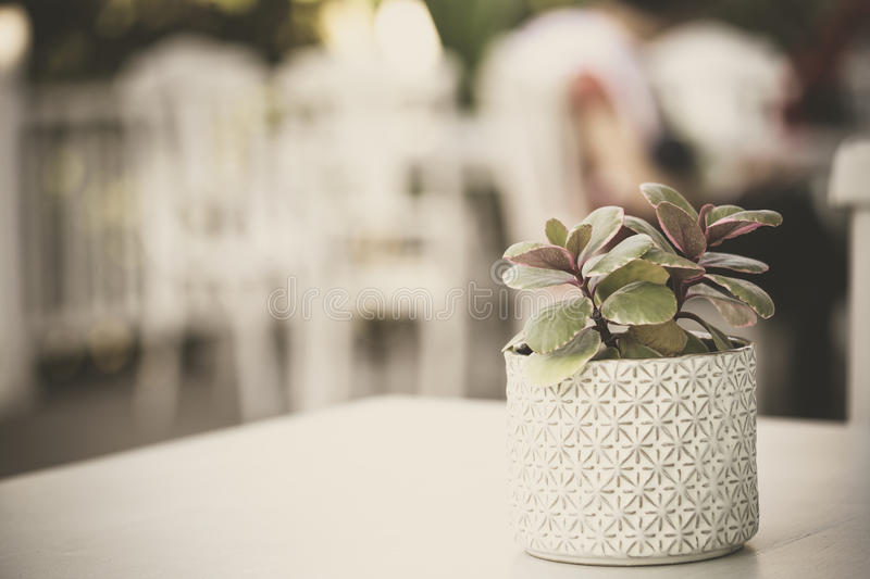 Plant in ceramic pot. Green plant in ceramic pot still life, vintage stock photo