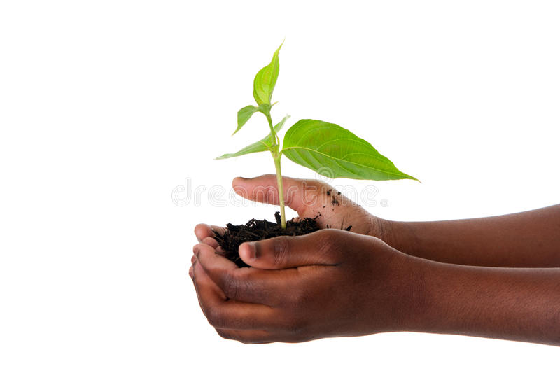 Plant in child hands stock photography