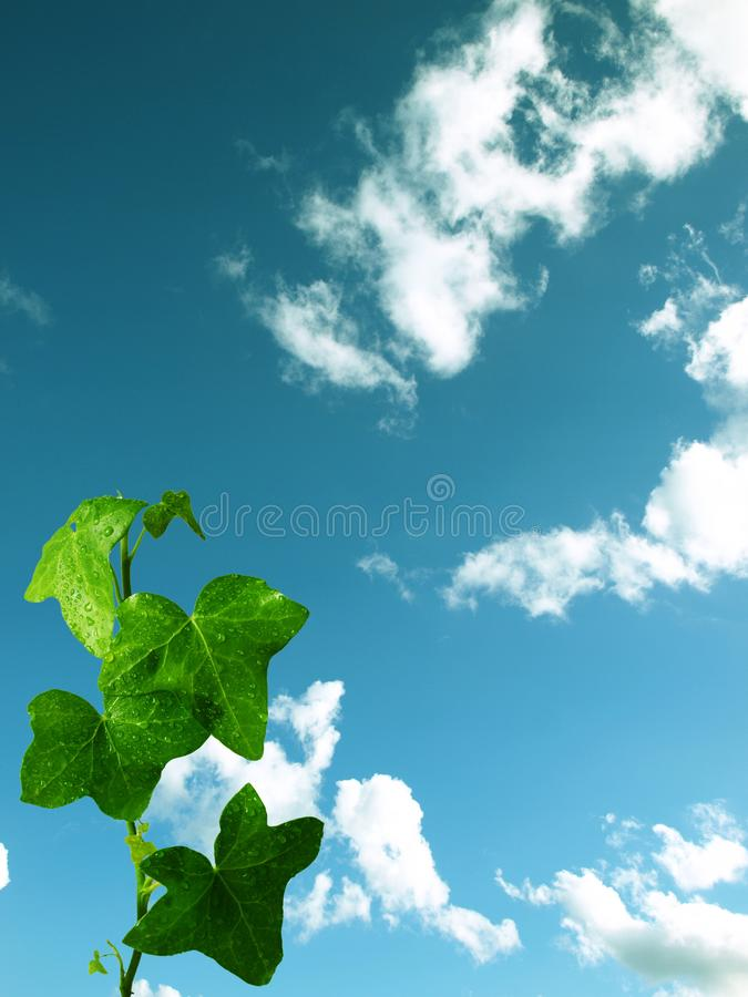 Plant on cloudy background stock images