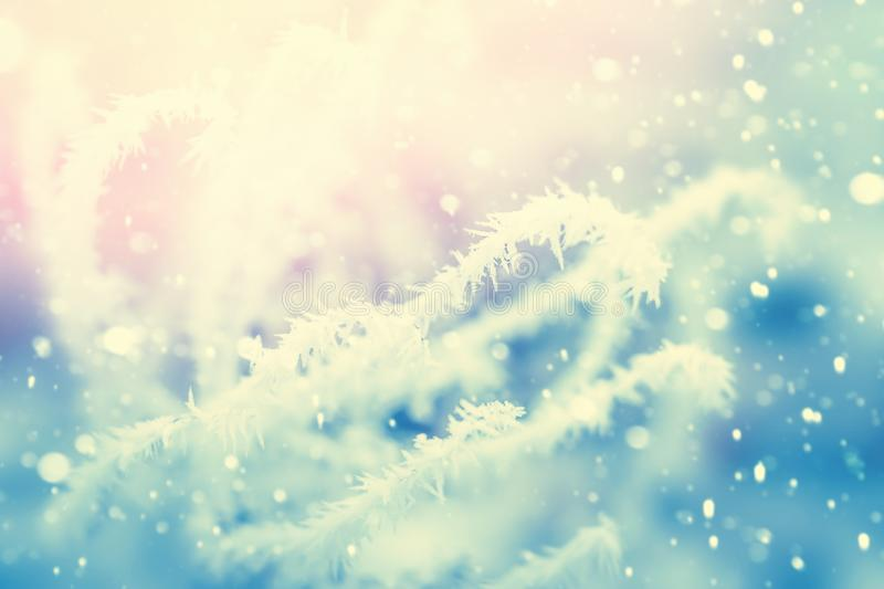Plant covered with ice frost. Winter snow nature background, vintage filter stock images