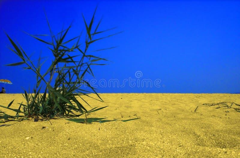 Plant in desert stock photography