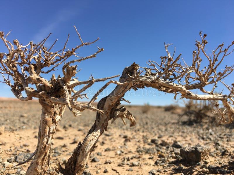 plant in desert royalty free stock photos