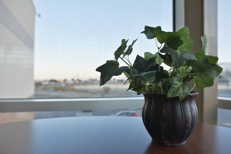 Plant on desk stock images