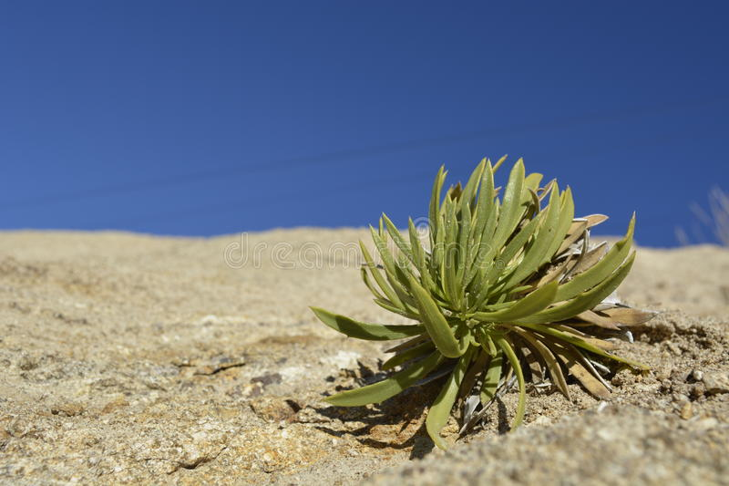A plant in the dessert stock photo