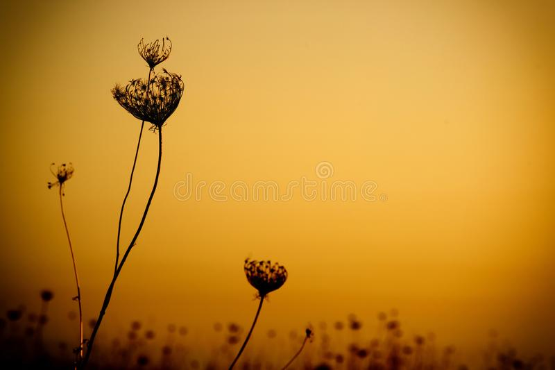 Plant detail against the sunset. Macro of a wild plant`s profile against an orange sunset sky stock photo