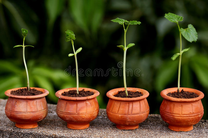 Plant evolution -New life stock photography