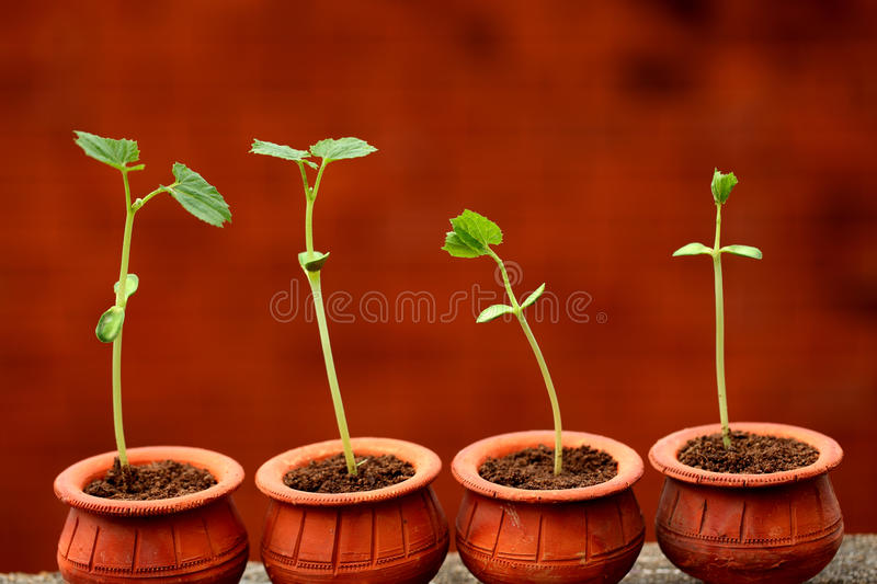 Plant evolution -New life stock images