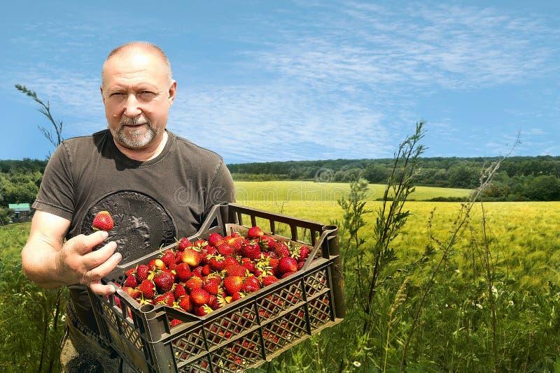 Plant, Farm, Agriculture, Field Free Public Domain Cc0 Image