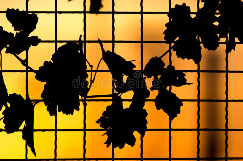 Plant on the fence at sunset stock photos