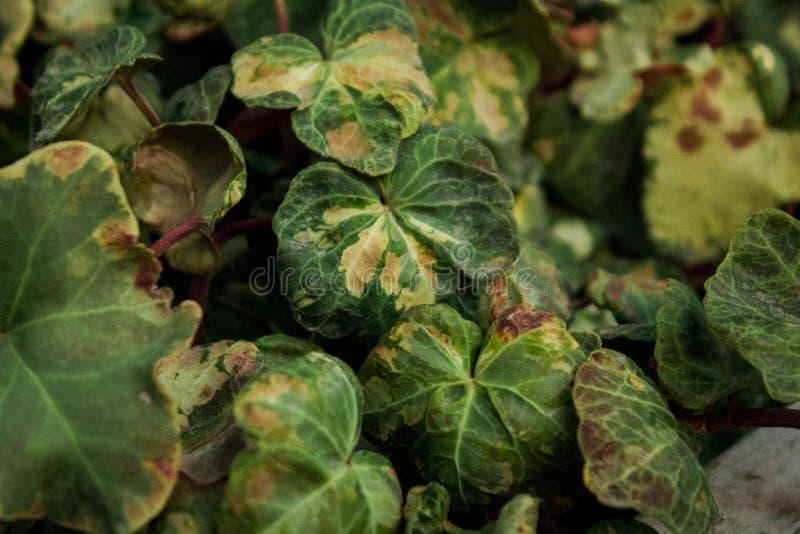 Plant& x27 ; feuilles de s photo libre de droits