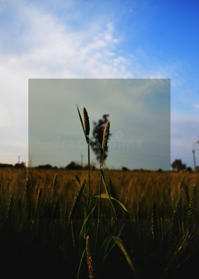 Plant royalty free stock images