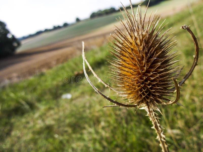 Plant, Flora, Flower, Close Up Free Public Domain Cc0 Image