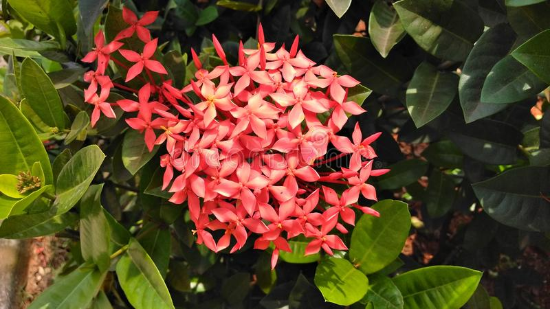 Plant, Flora, Flower, Shrub Free Public Domain Cc0 Image