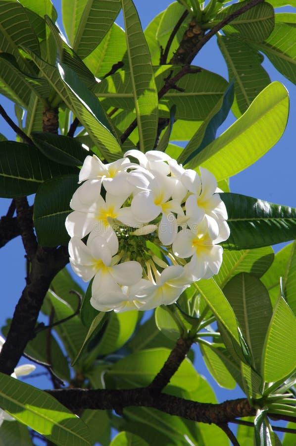 Plant, Flora, Flower, Spring Free Public Domain Cc0 Image