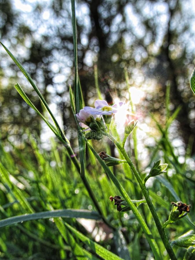 Plant, Flora, Grass, Spring royalty free stock images