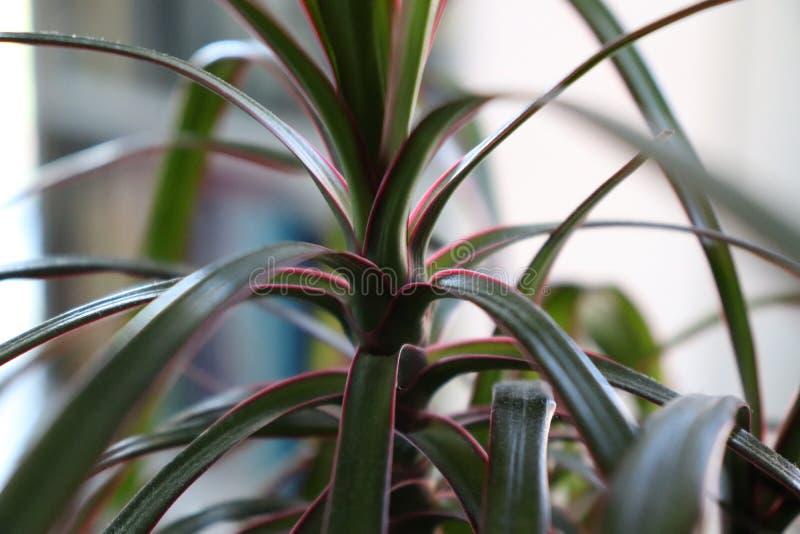 Plant, Flora, Leaf, Plant Stem Free Public Domain Cc0 Image