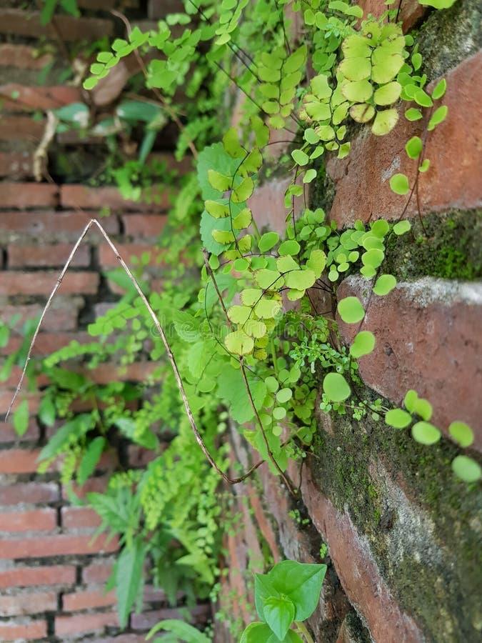 Plant, Flora, Leaf, Vascular Plant Free Public Domain Cc0 Image