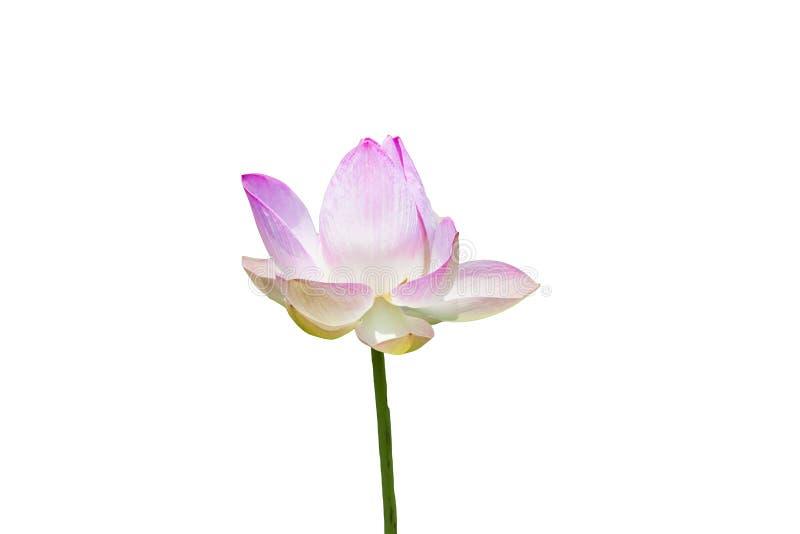Plant&flower imagenes de archivo