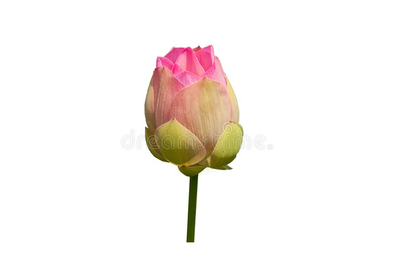 Plant&flower fotos de archivo libres de regalías