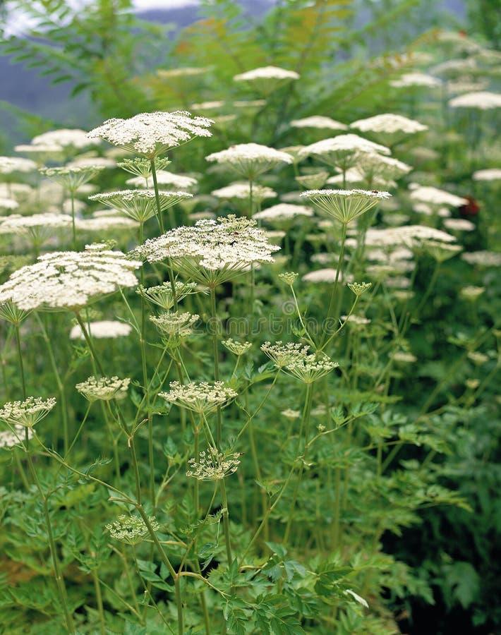 Plant. Flower royalty free stock photos