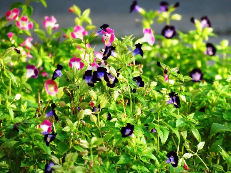 Plant, Flower, Flora, Flowering Plant Free Public Domain Cc0 Image