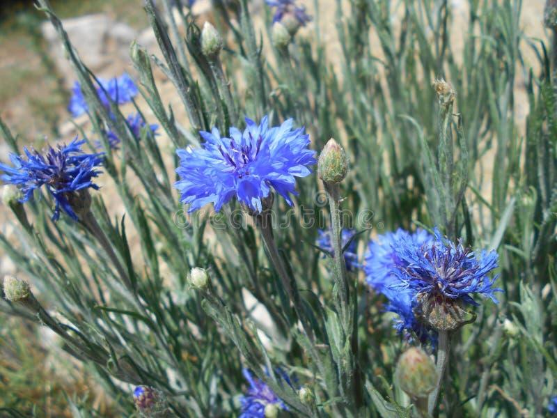 Plant, Flower, Flora, Grass Free Public Domain Cc0 Image