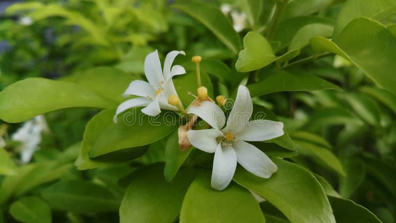 Plant, Flower, Flora, Leaf Free Public Domain Cc0 Image