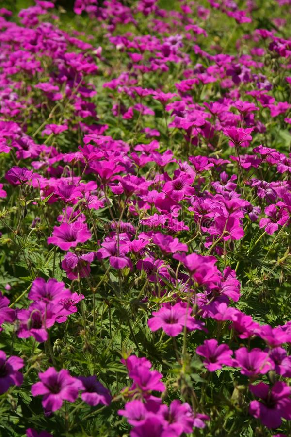 Plant, Flower, Flora, Purple royalty free stock images