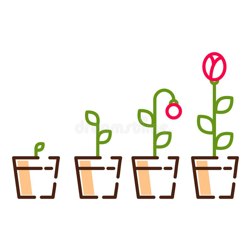 Plant flower growth process line icons vector. Flower in a pot life cycle illustration vector illustration