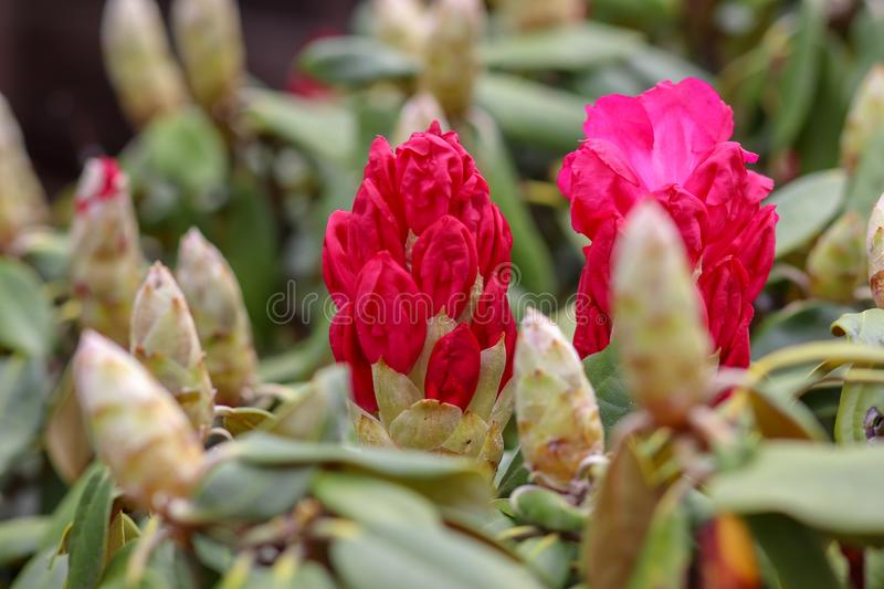 Plant, Flower, Pink, Flowering Plant stock photography
