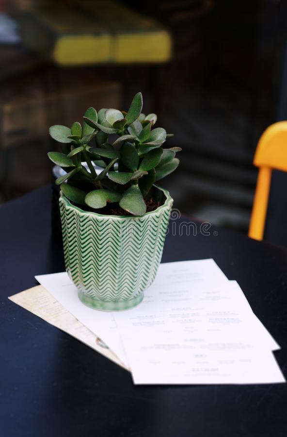 Plant in flower pot on a wooden table. royalty free stock photo