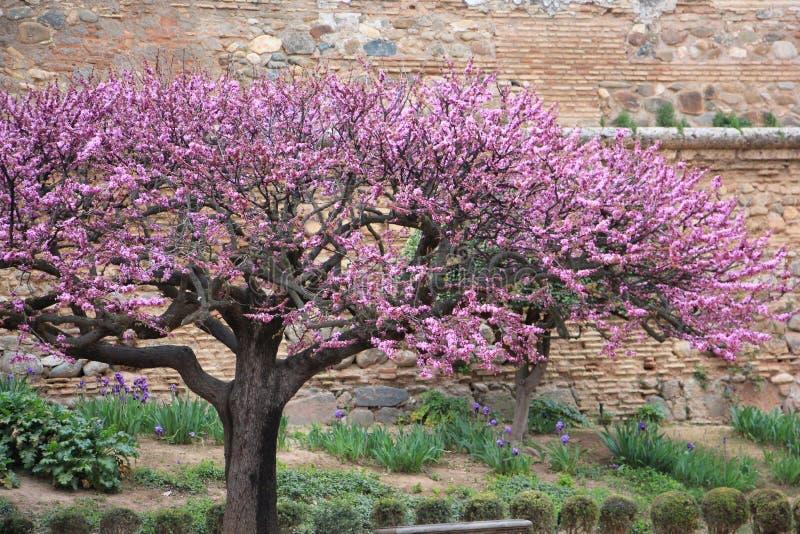 Plant, Flower, Purple, Blossom royalty free stock photos