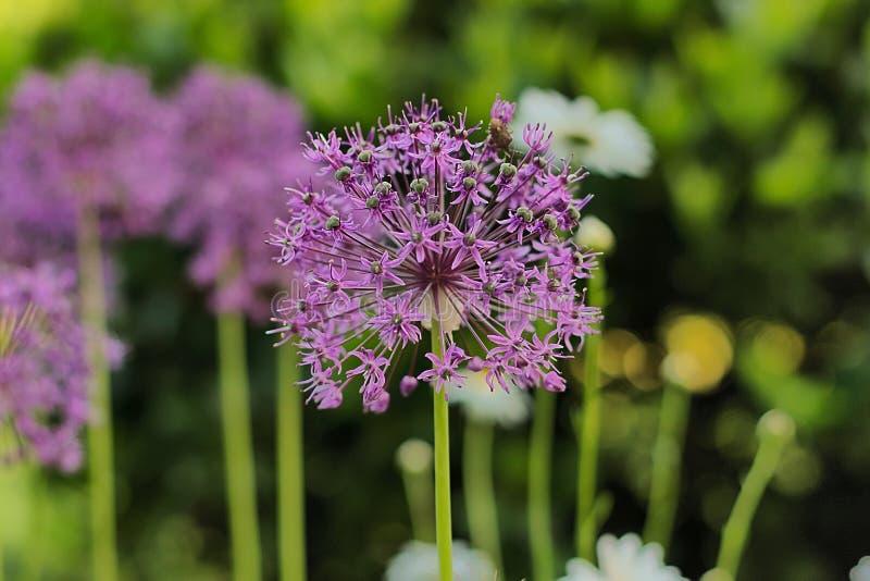 Plant, Flower, Purple, Flora Free Public Domain Cc0 Image