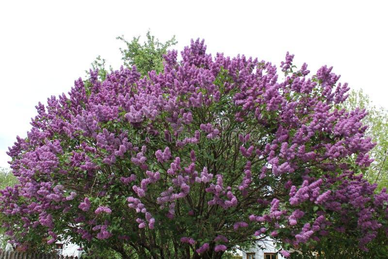 Plant, Flower, Purple, Lavender Free Public Domain Cc0 Image