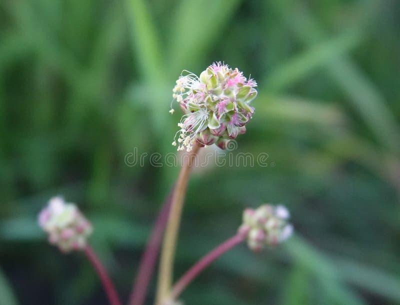 Plant, Flower, Subshrub, Flowering Plant Free Public Domain Cc0 Image