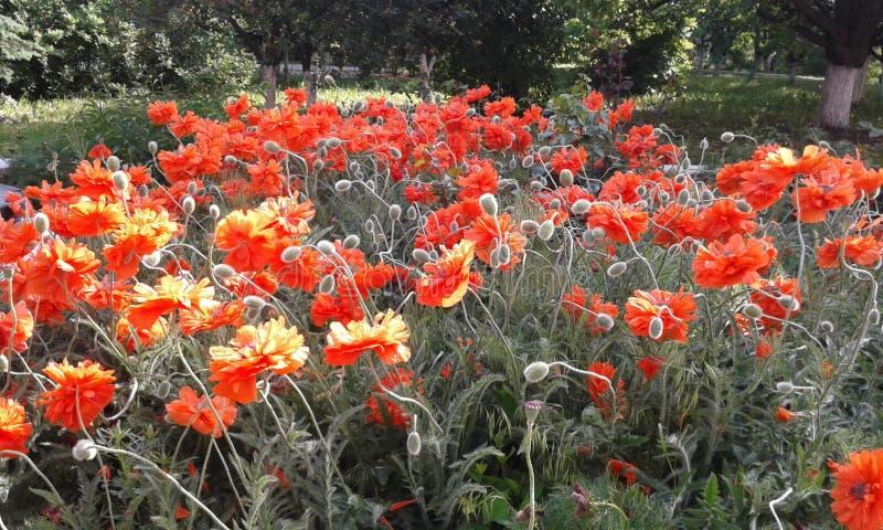 Plant, Flower, Wildflower, Flowering Plant Free Public Domain Cc0 Image