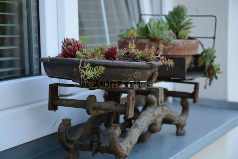 Plant, Flowerpot, Furniture, Flower Free Public Domain Cc0 Image