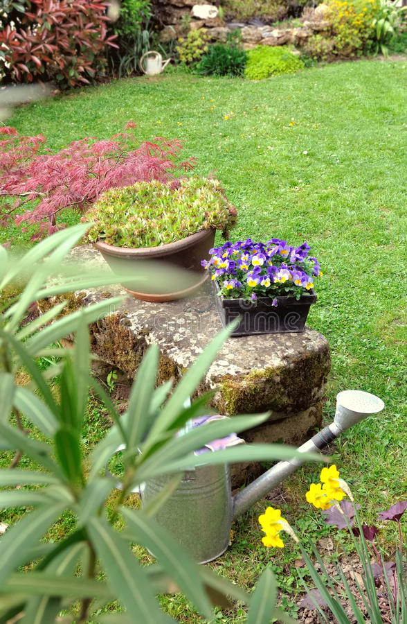 Plant and flowerpots in garden stock photo