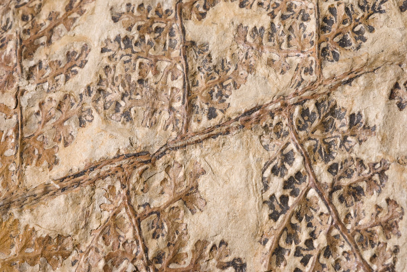 Plant Fossil Royalty Free Stock Photos