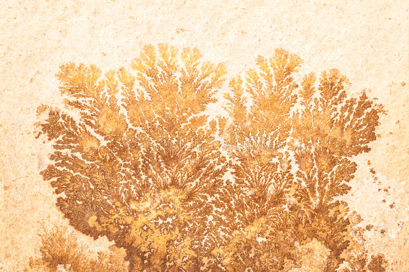 Plant fossil. Ancient plant fossil on a slice of sandstone or dendritic natural formations stock photo