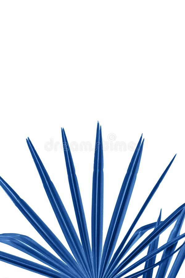 Plant in galaxy blue color royalty free illustration