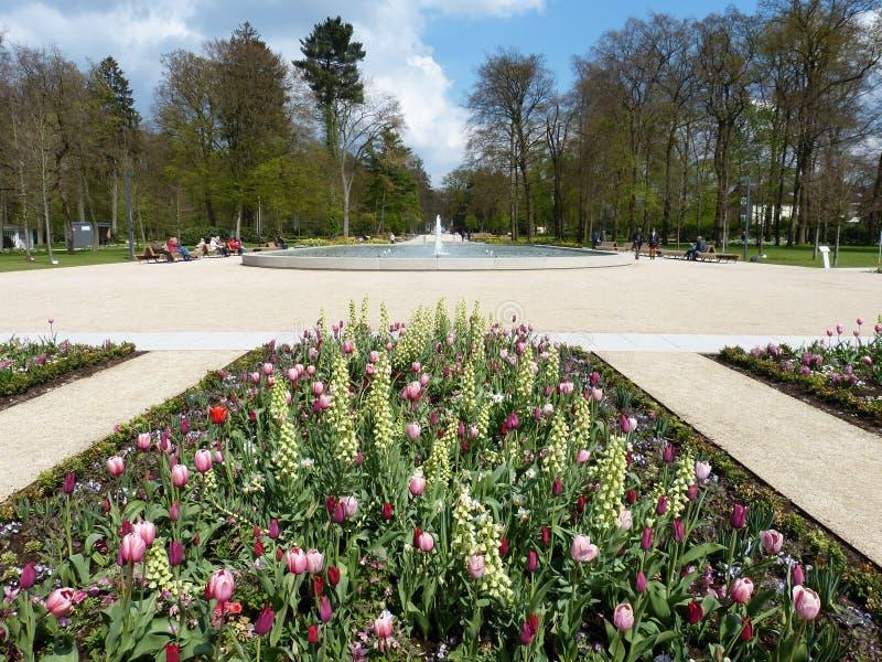 Plant, Garden, Flower, Botanical Garden royalty free stock photography