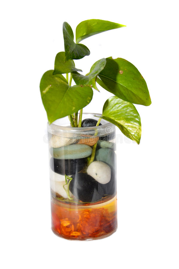 Plant in a glass