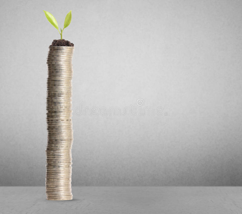 Plant on gold coins. On a gray background stock photography