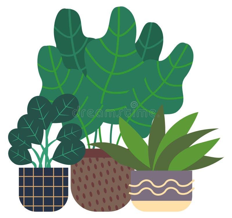 Plant gommifère et plante d'intérieur, serre chaude Flora illustration stock